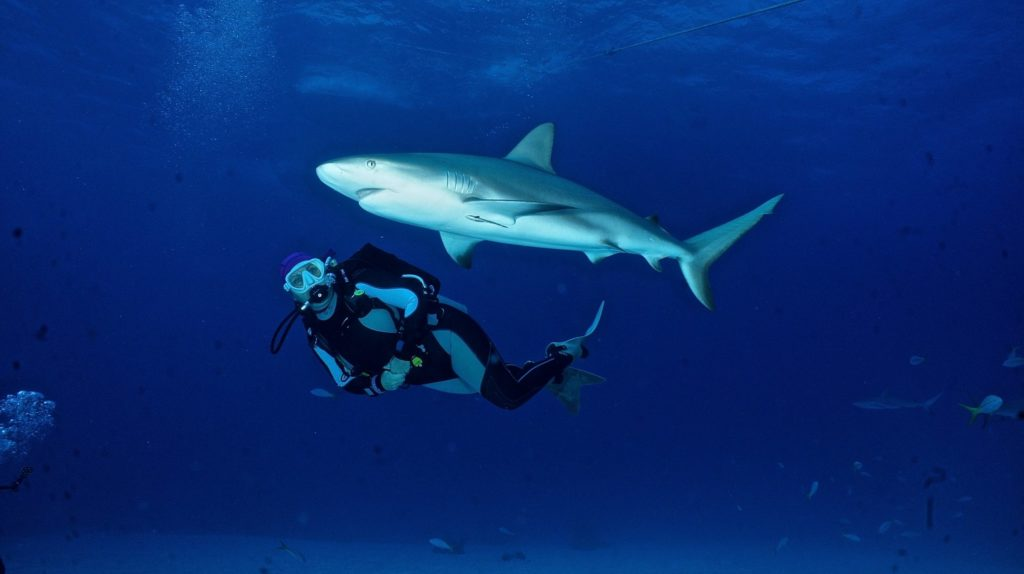 Discovery Channel GO Diving