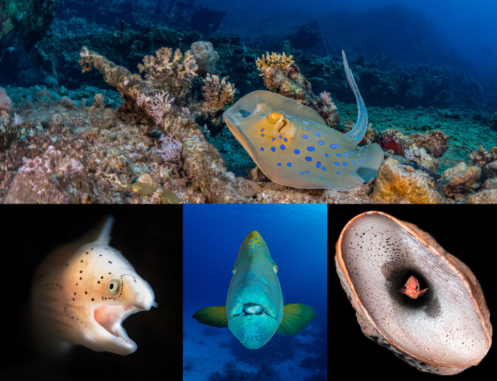 Booking opens for mini photo workshops at GO Diving Show 1